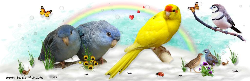 1-birds-4u.com-signed-3